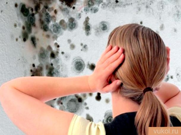 Как избавиться от грибка на стенках